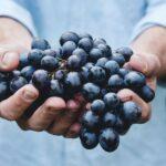 Proanthenols suplement diety z pestek winogron life plus